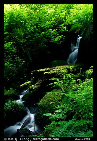 Waterfall, Prairie Creek Redwoods State Park. Redwood National Park (color)