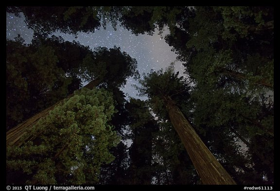 Redwood grove and stary sky at night, Jedediah Smith Redwoods State Park. Redwood National Park (color)