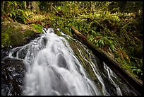 Upper cascades of Fern Falls and fallen tree, Jedediah Smith Redwoods State Park. Redwood National Park ( color)