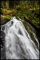 Upper cascades of Fern Falls , Jedediah Smith Redwoods State Park. Redwood National Park ( color)