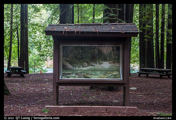 Interpretive picture and redoods on the banks of Smith River, Jedediah Smith Redwoods State Park. Redwood National Park (color)