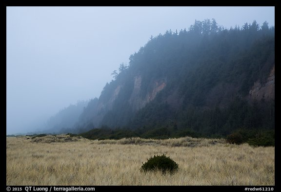 Gold Bluffs in the fog, Prairie Creek Redwoods State Park. Redwood National Park (color)