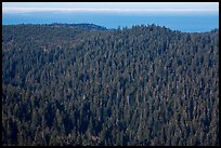 Distant view of redwood forest and ocean from Redwood Creek Overlook. Redwood National Park ( color)
