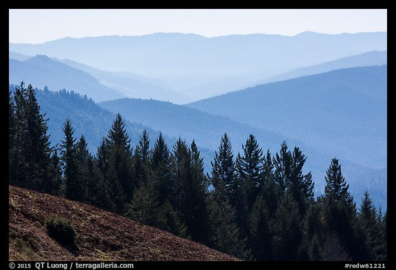 Trees and ridges from Dolason Prairie. Redwood National Park (color)