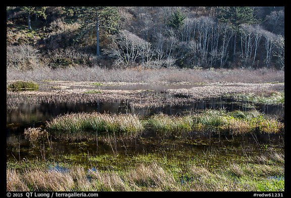 Grasses and pond. Redwood National Park (color)