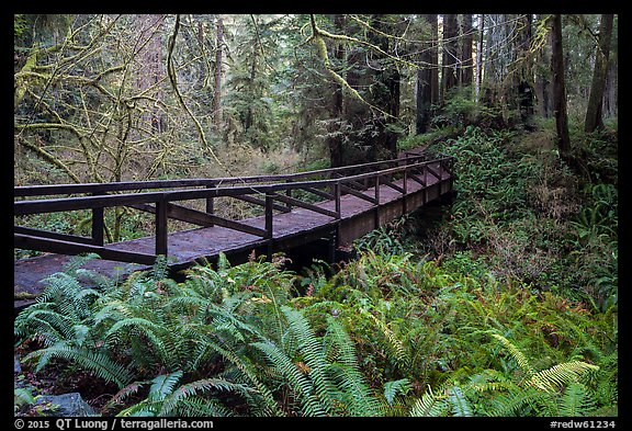 Bridge over Prairie Creek, Prairie Creek Redwoods State Park. Redwood National Park (color)