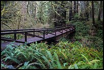 Bridge over Prairie Creek, Prairie Creek Redwoods State Park. Redwood National Park ( color)