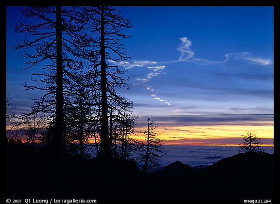 Sky trails at sunset. Sequoia National Park (color)