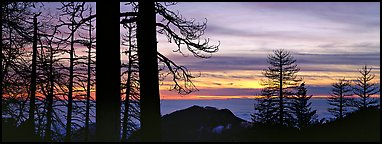 Sea of clouds and trees at sunset. Sequoia National Park (Panoramic color)