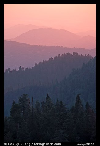 Receding tree-covered mountain ridges at sunset. Sequoia National Park (color)