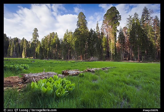 Crescent Meadow, late afternoon. Sequoia National Park (color)
