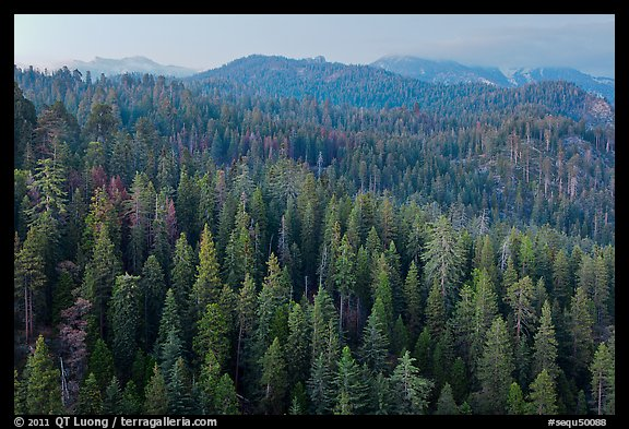Forest and mountains at dusk. Sequoia National Park (color)