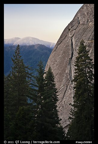 Forest and base of Moro Rock at dawn. Sequoia National Park, California, USA.