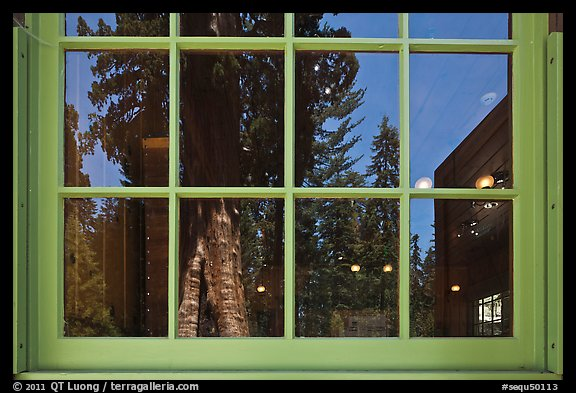 Sentinel tree, Giant Forest Museum window reflexion. Sequoia National Park (color)