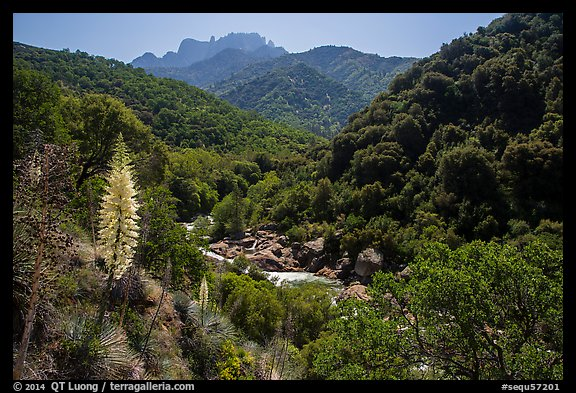 Yucca and Middle Fork of the Kaweah River. Sequoia National Park (color)