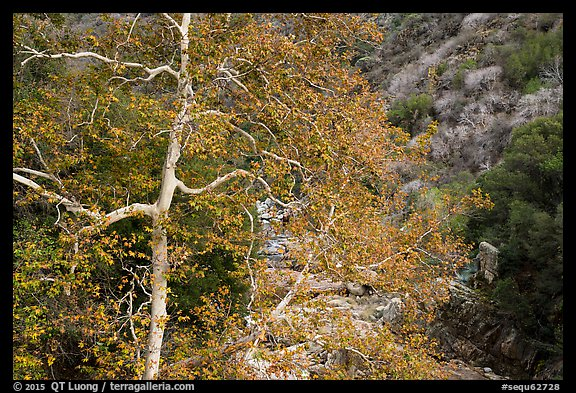 Trees in autumn and Middle Fork of the Kaweah River. Sequoia National Park (color)