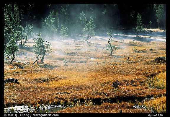 Mist raising from Tuolumne Meadows on a autumn morning. Yosemite National Park (color)