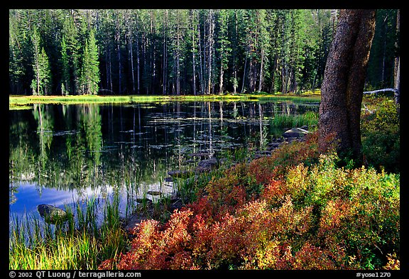 Shrubs in autumn foliage and reflections, Siesta Lake. Yosemite National Park, California, USA.