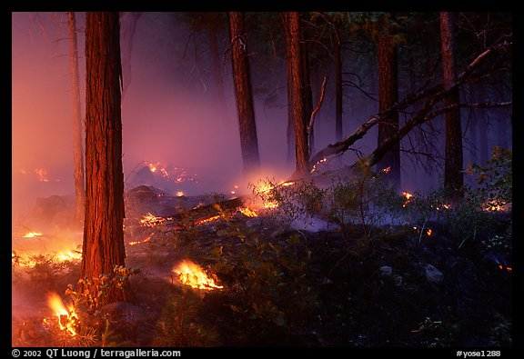 Forest fire. Yosemite National Park (color)
