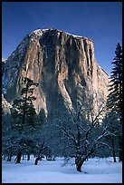 West face of El Capitan in winter. Yosemite National Park, California, USA.