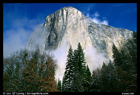 El Capitan, trees and fog, morning. Yosemite National Park (color)
