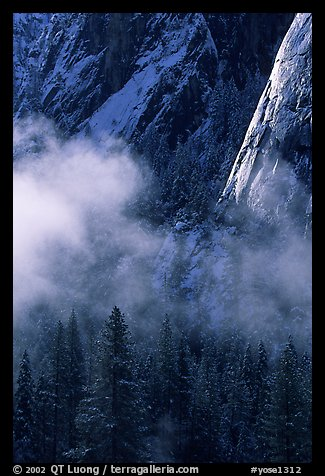Pines, mist, and Cathedral Rocks. Yosemite National Park (color)