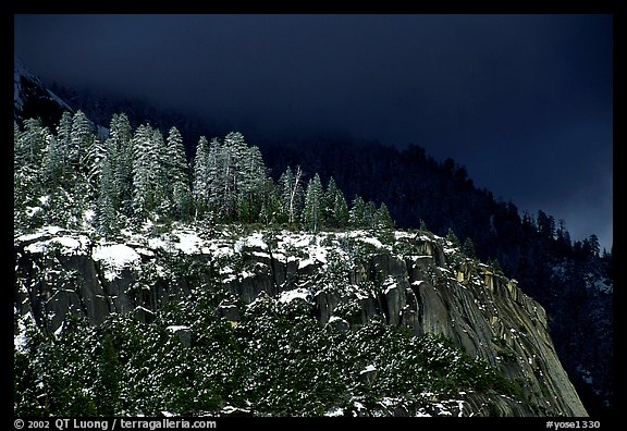 Pine trees on Valley rim, winter. Yosemite National Park (color)