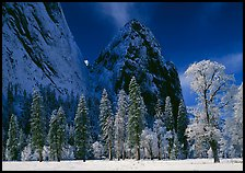 Frozen trees and Cathedral Rocks, early morning. Yosemite National Park ( color)