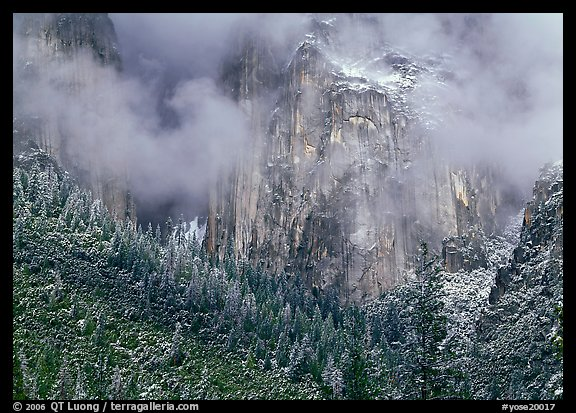 Trees, cliffs and mist. Yosemite National Park (color)