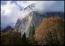 El Capitan with clouds shrouding summit. Yosemite National Park ( color)