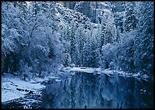 Snowy trees and rock wall reflected in Merced River. Yosemite National Park, California, USA.