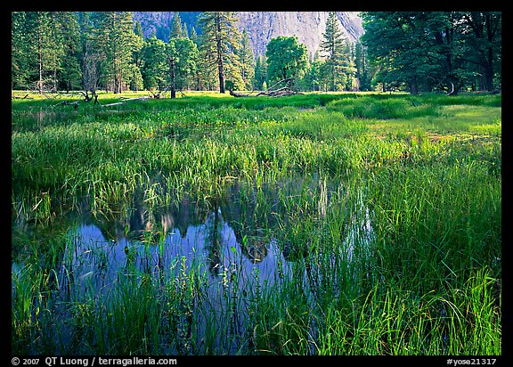 Flooded Meadow below Cathedral Rock in spring. Yosemite National Park (color)