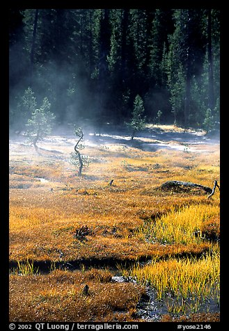 Mist raises from Tuolumne Meadows on a autumn morning. Yosemite National Park (color)