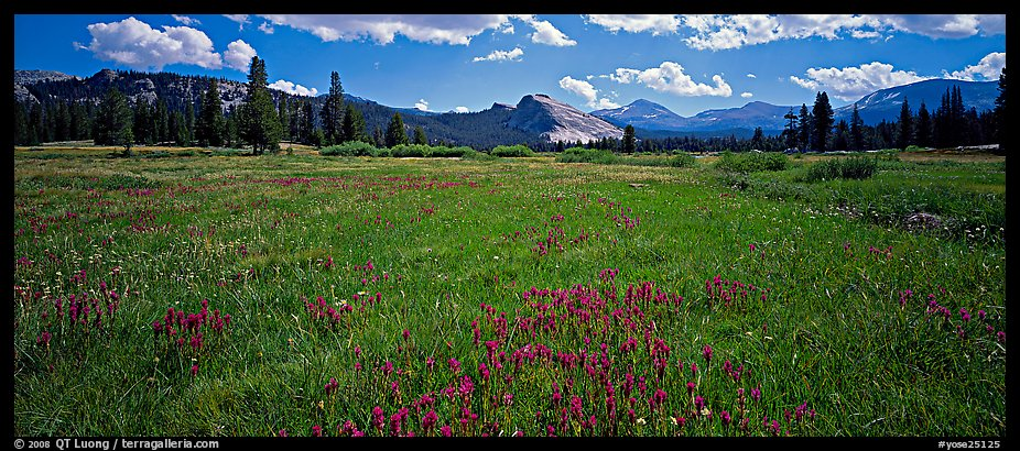 Tuolume Meadows in summer with indian paintbrush. Yosemite National Park (color)