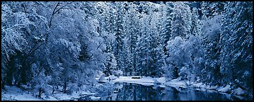 Wintry forest and reflections. Yosemite National Park (Panoramic color)