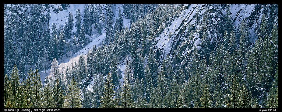 Slopes with trees in winter. Yosemite National Park (color)