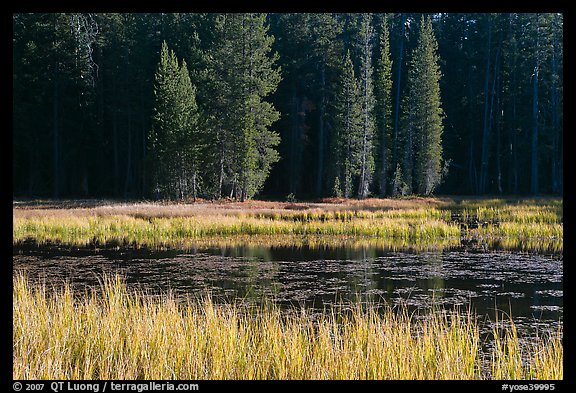 Grass in autumn, Siesta Lake. Yosemite National Park (color)
