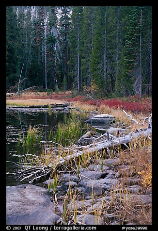 Shore with fall colors, Siesta Lake. Yosemite National Park, California, USA.