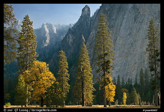Oaks, pine trees, and rock wall. Yosemite National Park (color)
