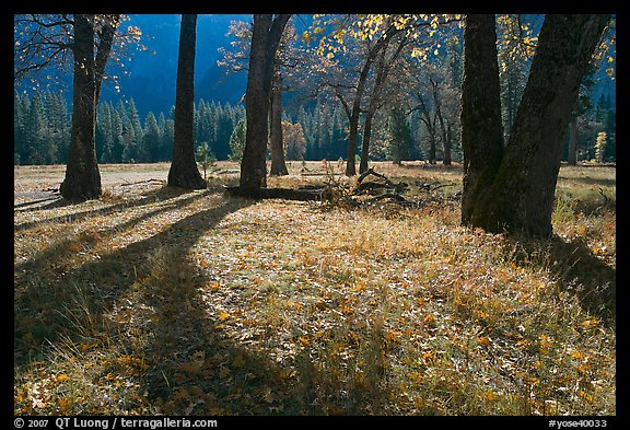 El Capitan Meadow in autumn. Yosemite National Park, California, USA.