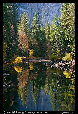 Merced River, trees and reflections at the base of Cathedral Rocks. Yosemite National Park (color)