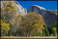 Trees in autumn foliage and Half Dome, Ahwahnee Meadow. Yosemite National Park, California, USA. (color)