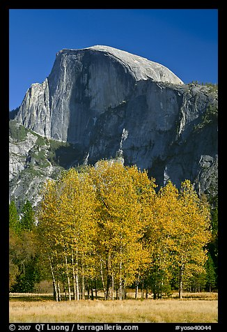 Aspens and Half Dome in autumn. Yosemite National Park (color)