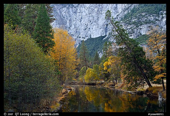 Trees in fall foliage bordering Merced River. Yosemite National Park (color)