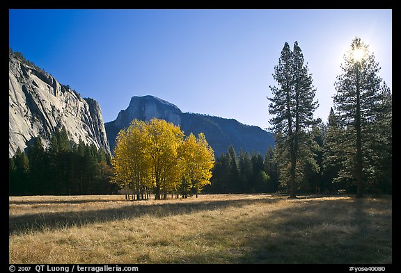 Ahwahnee Meadow with sun shinnig through tree, early morning. Yosemite National Park (color)