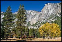 Aspens, pine trees, and Yosemite Falls wall in autum. Yosemite National Park, California, USA. (color)