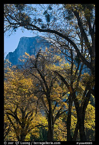 Oak trees and Half-Dome. Yosemite National Park (color)