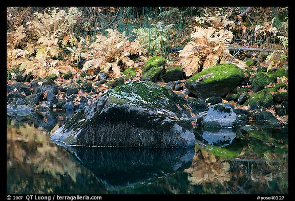 Ferms, mossy boulders, and reflections. Yosemite National Park, California, USA.