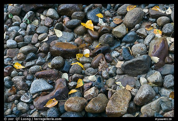 Autumn leaves and pebbles. Yosemite National Park (color)