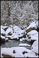 Snow-covered boulders in Merced River and trees. Yosemite National Park, California, USA.